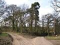 Fragment of woodland by Kite's Nest Lane - geograph.org.uk - 1768238.jpg