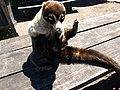 Friendly Critter 2, Irazu Volcano, Costa Rica - Daniel Vargas.jpg