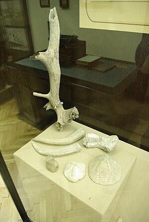 Jadar Museum - Image: From museum in Loznica 1
