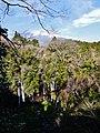 Fujinomiya Shiraito-Wasserfall & Fuji-san 1.jpg