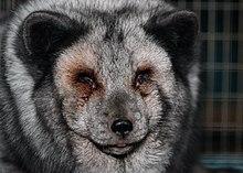 fd6ec055284 Fur animal in Finland, 2018