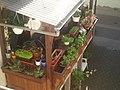 Gaby´s Balkon, Juni 2013 - panoramio.jpg