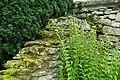 Garden detail - Snowshill Manor - Gloucestershire, England - DSC09634.jpg