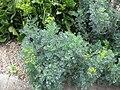 Gardenology.org-IMG 2797 rbgs11jan.jpg