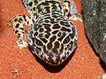 Gecko 1.jpg