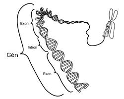 hvor mange gener har et menneske