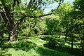 General view - Arnold Arboretum - DSC06724.JPG