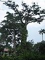 Ghana Aburi Botanical gardens.jpg