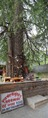 Ghatothkach Shrine - Manali 2014-05-11 2708-2709.TIF