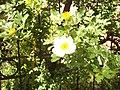 Giardino botanico di Brera (Milan) 193.jpg