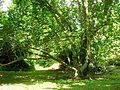 Giardino di Ninfa 17.jpg