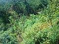 Gilan - panoramio (3).jpg