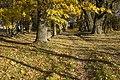 Glūdas kapi - cemetery - panoramio.jpg