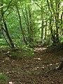 Glade near Ambers Farm - geograph.org.uk - 188685.jpg