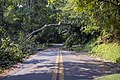 Glen Mill Road, Potomac, tree and wires. (7484632854).jpg