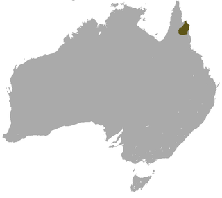 Godmans rock-wallaby Species of marsupial