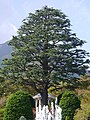Gora, Hakone, Ashigarashimo District, Kanagawa Prefecture 250-0408, Japan - panoramio (1).jpg