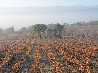 Goult - Vineyard in autumn