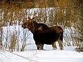 Grand Teton National Park (8478722625).jpg