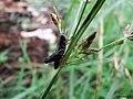 Grasshopper 3 (125494019).jpeg