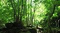 Green - panoramio (27).jpg