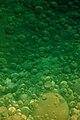 Green Lava.JPG
