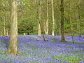 Greenfield Wood - geograph.org.uk - 797875.jpg