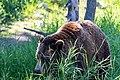 Grizzly Bär (29786314887).jpg