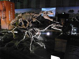 Guanlong - Mounted skeleton (foreground)
