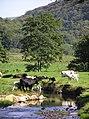 Gwaun Valley - geograph.org.uk - 239007.jpg