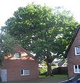 Hövelhof - Eiche, Am Finkenbach.jpg