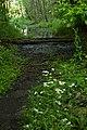 HENDERSONVILLE GREEN WAY, Hendersonville, TN ( apply to all) - panoramio.jpg