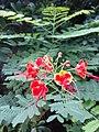 HK STT 石塘咀 Shek Tong Tsui 皇后大道西 Queen's Road West 翰林峰 Novum West Place green leaves red flowers December 2020 SS2 07.jpg