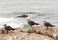 H gulls.jpg