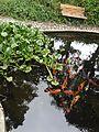 Hacienda Chorlavi pic. aa9362.jpg