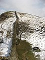 Hadrian's Wall from Sycamore Gap to Highshield Crags - geograph.org.uk - 750537.jpg