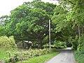 Halleaths Oak Tree - geograph.org.uk - 810851.jpg