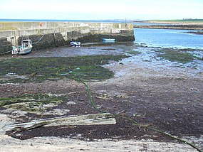 Harrow Harbour at Low Tide - geograph.org.uk - 486843.jpg