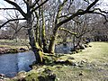 Haweswater Beck - geograph.org.uk - 1806513.jpg