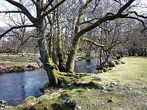 Haweswater Beck - Haweswater Beck, just north of Firth Woods, where it turns north towards Bampton Grange