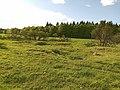 Heide- und Ruderalflächen.jpg
