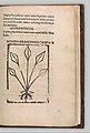 Herbarium MET DP327892.jpg