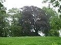 Herderen-Tumulus van Herderen (De La Brassinnestraat) (1).JPG