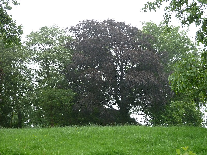 Tumulus Herderen, Riemst, Belgique