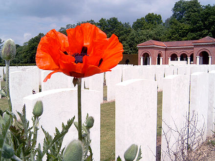 A red poppy in the CWGC London Cemetery, beside High Wood
