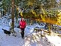 Hiking (12867940884).jpg