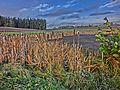 Hofweiher (HDR) - panoramio.jpg