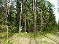 Holovne Liubomlskyi Volynska-zakaznyk botanical Spruce forest-general view near first guard board.jpg