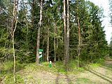 Holovne Liubomlskyi Volynska-zakaznyk botanical Spruce forest-general view near first guard board.jpg