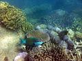 Hook Island Reef (13499677883).jpg